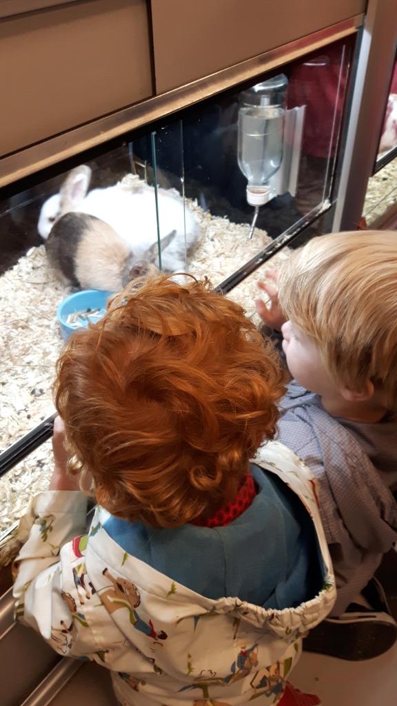 Foto bij dierendag